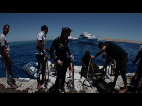 Best of Wrecks, Red Sea Master, June 2017