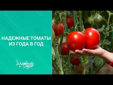 Надежные томаты из года в год