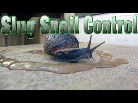 Slug Snail Control real time demonstration