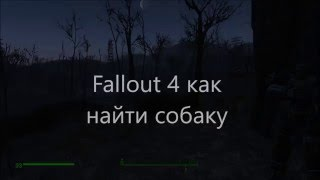 fallout 4 как найти собаку если она потерялась.