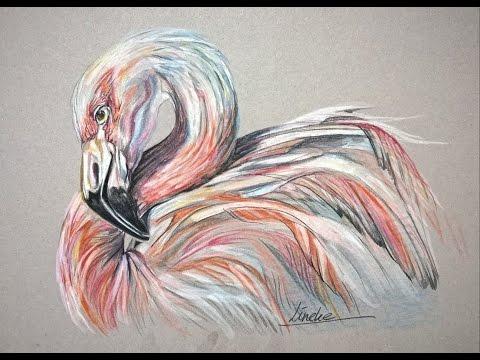 Flamingo Vogel tekenen met kleur potlood met Lineke Lijn