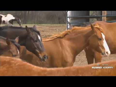 News Articles | Hope In The Valley Equine Rescue | Kansas Horse Rescue