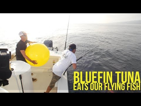 Fishing For Bluefin Tuna With Plastic And Real Flying Fish