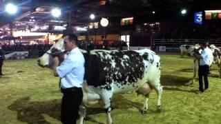 SIA 2013 : Aronde au Concours Général Agricole