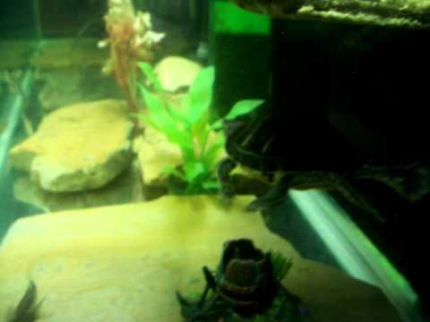 New Turtle Tank Setup Youtube