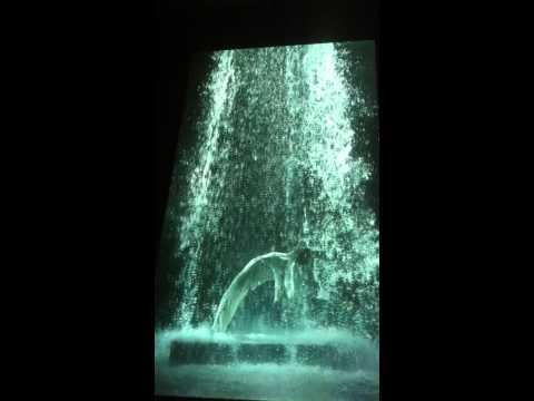 BIll Viola: 'Tristan's Ascension'
