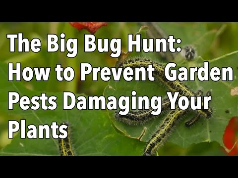 The Big Bug Hunt: How to Prevent Common Garden Pests Damaging Your Crops - 동영상