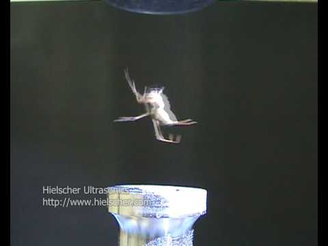 Spider does the Spider-Man - Ultrasonic Levitation of a Spider (http://www.hielscher.com)