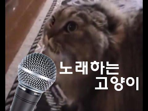 노래부르는 고양이 / 고양이송