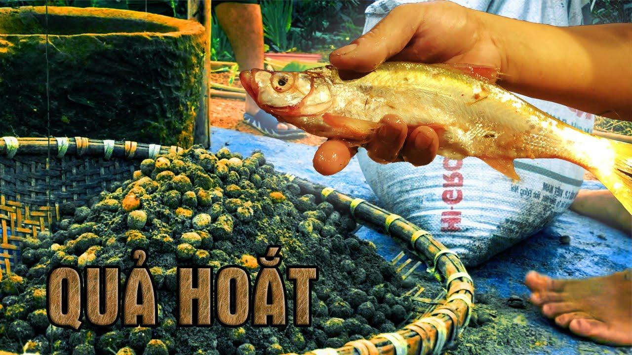 Đánh Bắt Cá Bằng Quả Rừng | LTL FOOD