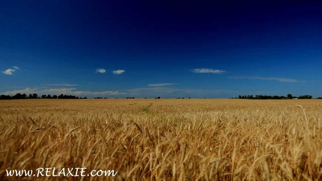 Best Animated Wallpapers 60minutes2relax Golden Wheat Field Youtube