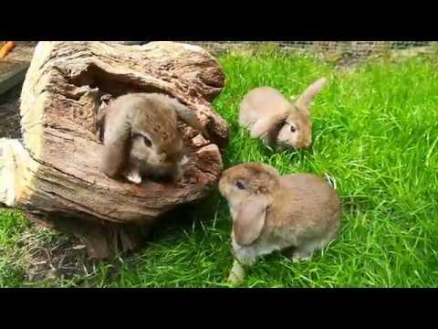 Groei van de jonge konijnen – Konijnen