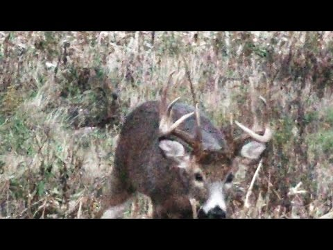 Buck & Rut Archery Deer Season 2015 Pennsylvania - Royer