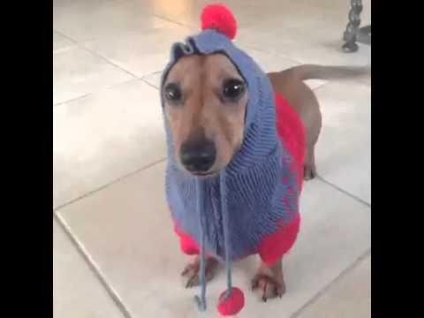 Sweater Weather Vine B...