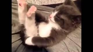 Süße kleine Katze pupst