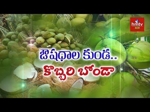Coconut Processing Guide By Mynampati Sreenivasa Rao | hmtv Agri