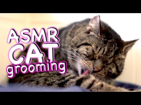 ASMR Cat - Grooming #22 - Eat Lick Sleep