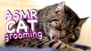 ASMR Cat - Grooming #22 - Eat Lick Sleep