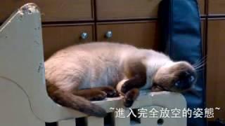 當二胡音樂響起 優雅小貓coffee的特別姿態