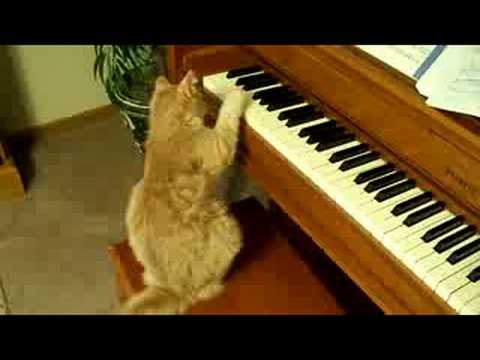 My Cat Playing the Piano
