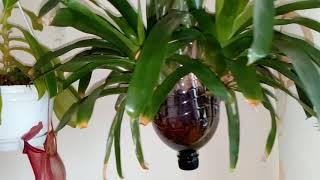 Cómo plantar una Orquídea en una botella de plástico
