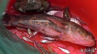 收20多条地笼,幸运抓到一条大家伙,一斤重的笋壳鱼