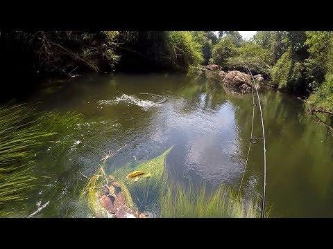 PESCARIA DE PIAU, diversas espécies e imagens do fundo do rio!