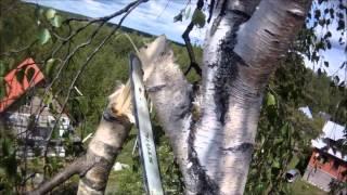 Надо спилить дерево, а места мало?(http://9973079.moy.su/ Ленинградская область., 2012-06-10T17:54:11.000Z)