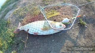 Риболовля у Мамеда. Амур, товстолобик, сазан.