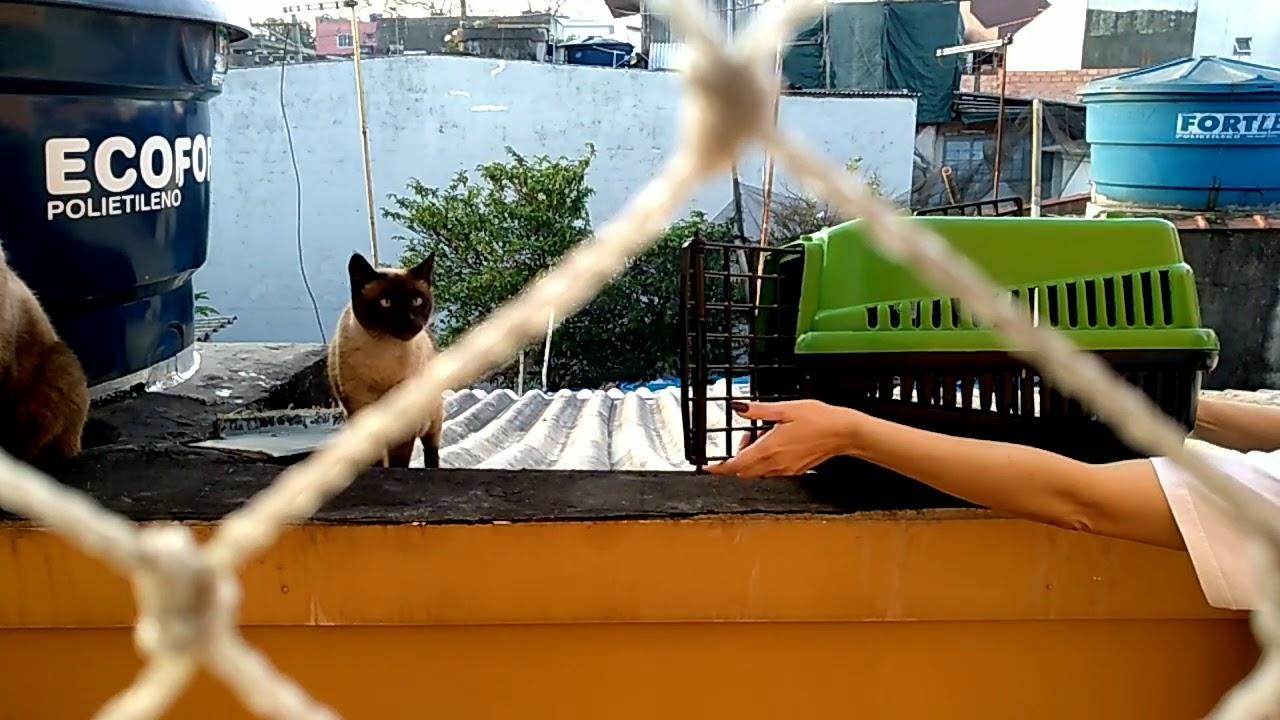 Conseguimos resgatar mais uma gatinha do telhado. Tokio
