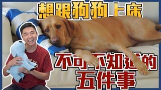 想跟狗狗上床 不可不知道的五件事熊爸估狗