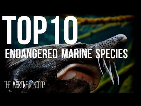 TOP 10 ENDANGERED MARINE SPECIES