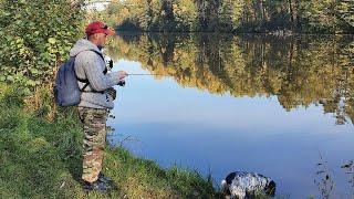 Осеннее Окуневое Эльдорадо В конце бонус смотри до конца рыбалка окунь осень fishing спиннинг