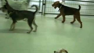Indoor Small Dog Play Group At Park Cities Obedience School!
