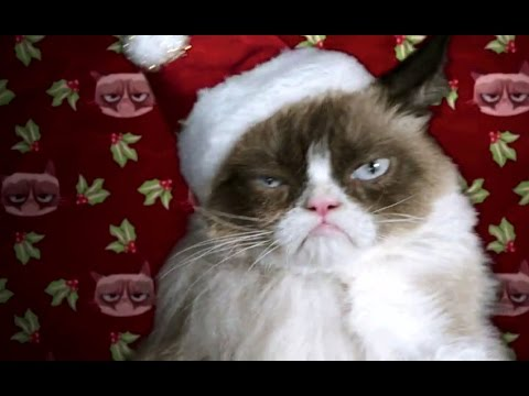 Grumpy Cat Christmas.Grumpy Cat S Worst Christmas Ever Official Trailer 2014 Aubrey Plaza Moviehd