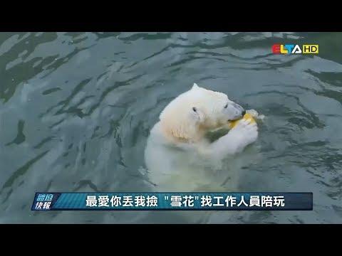 愛爾達電視20200429│防疫期間小確幸 北極熊玩球 排球狗狗練新招