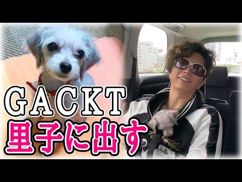 GACKTが愛犬を里子に出しまのイメージ画像