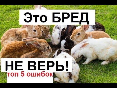 Вопрос: Что для начинающих кролиководов полезно знать?