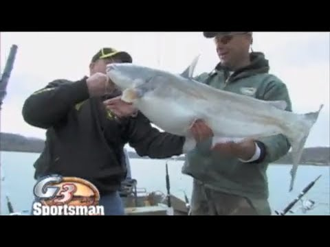 Catfishing tips on BIG Blue Catfish in Lakes - (From the G3 Sportsmans Archives)