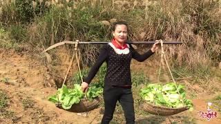 【巧婦9妹】从青菜变成酸菜,只需这几步,巧妇9妹做的这一大缸留过年吃!