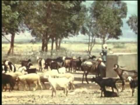 berkane 1970 par john  dubois