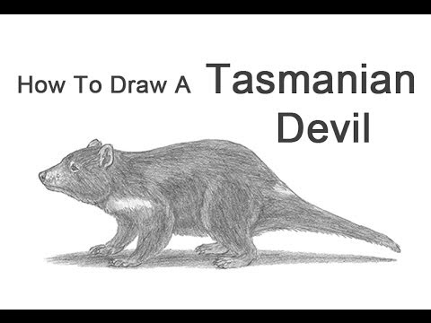 How to Draw a Tasmanian Devil  YouTube