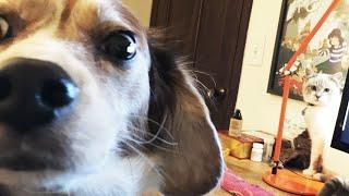 When Molly Met Milquetoast ❄ Vlogmas 2015 (Day 8)