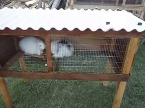 Jaula ideal para 2 hasta 5 mascotas conejos cuyes youtube - Casas para conejos enanos ...