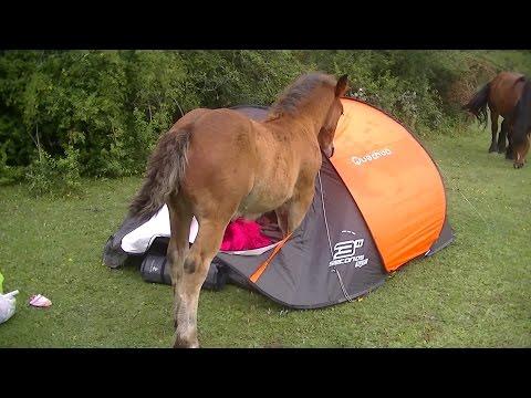 funny camping horses attack
