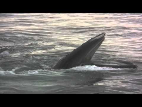 Cape Ann Whale Watch in Gloucester Massachusetts (MA)
