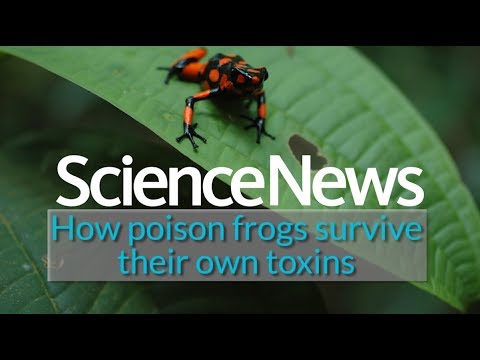 How poison frogs survive their own toxins | Science News