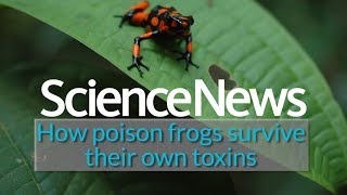 How poison frogs survive their own toxins   Science News