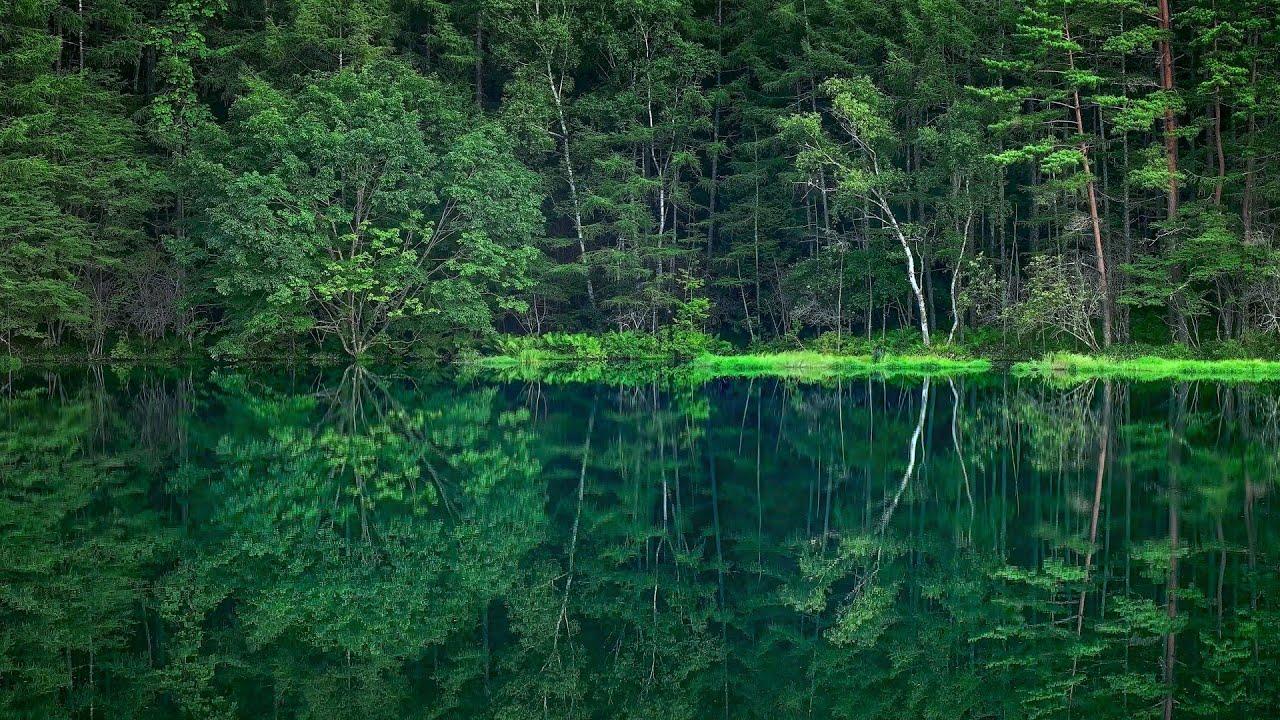 Kết quả hình ảnh cho mishaka pond