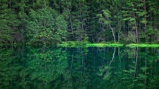 秋の御射鹿池の映像はこちら https://youtu.be/mzPKke3_uGw The link above is a movie shot in autumn at the same lake. 昨年夏、FullHDで撮影した御射鹿池の映像 ...